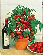 200 PC/bolsa de semillas de tomate bonsai,