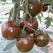 ASTONISH SEEDS: 20PCS semillas de tomates Semillas