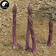 ASTONISH SEEDS: Comprar Purple Asparagus Vegetable