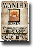 Chow Chow Wanted imán para nevera