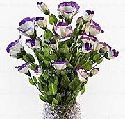 Potseed Plantas 100PCS Eustoma Raras Semillas