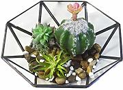 ZZKJZBZ Creative Terrarium Air Plantas Holder